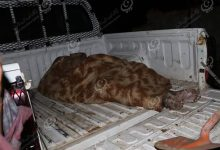 Photo of The body of a farmer was found on a farm east of Shehat