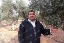 Photo of Olive harvesting season started in Bani Walid