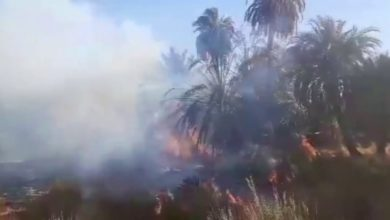 Photo of Fire destroys thousands of palm trees in Tazirbu