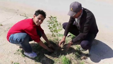 Photo of A tree-planting campaign in Tobruk