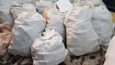 Photo of Cannabis seized in Ajdabiya city in east Libya