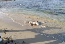 Photo of Two bodies of migrants recovered in Sabratha