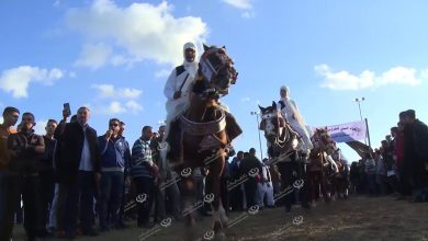 Photo of The Libyan Equestrian Festival started in Tripoli