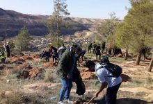 Photo of Afforestation campaign in Yefren