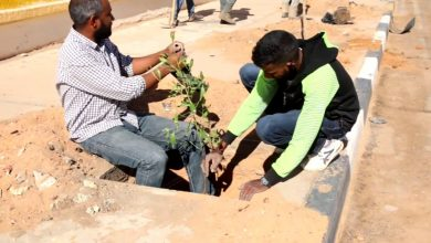 Photo of A campaign to plant 1000 Tecoma trees in Sabha