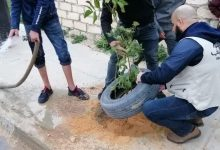 Photo of An afforestation campaign in Zliten