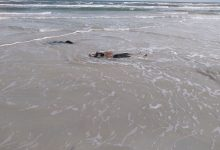 Photo of Three bodies of migrants found on the shore