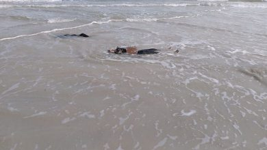 Photo of IOM: 100 migrants drowned off the Libyan coast